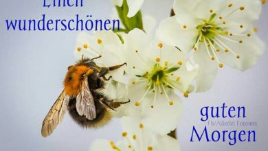 Guten Morgen Bilder Download 390x220 - Guten Morgen Bilder Download