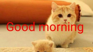 Animals Greeting Good morning good morning Images 390x220 - Animals Greeting Good morning good morning Images