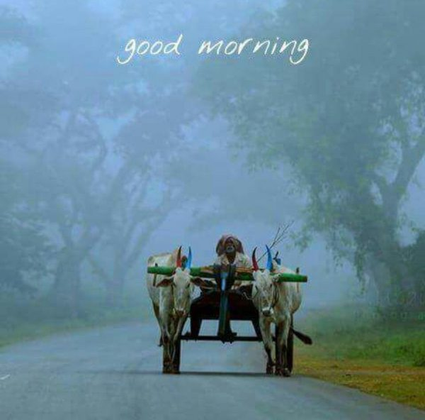 Animals Greeting Good morning today Images - Animals Greeting Good morning today Images