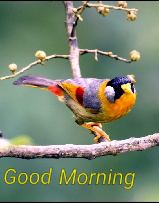 Birds a good morning images Greetings Images - Birds a good morning images Greetings Images