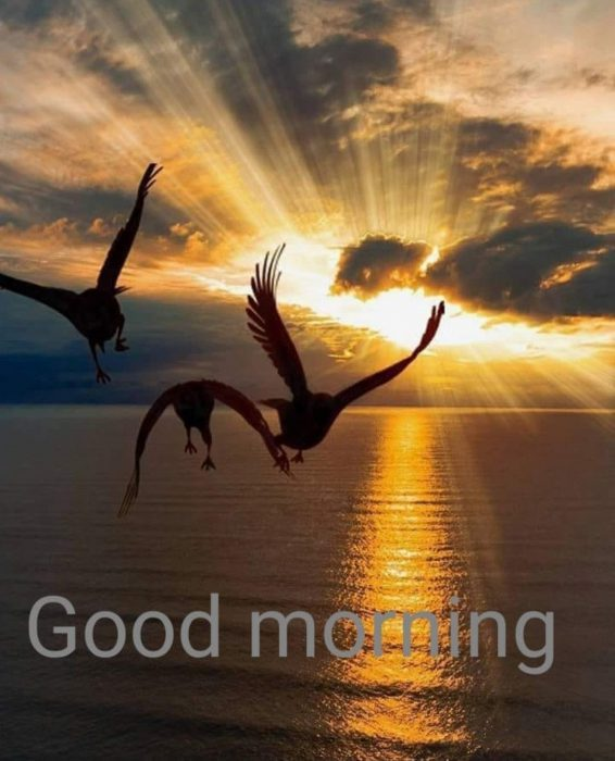 Birds good morning greetings images Greetings Images - Birds good morning greetings images Greetings Images
