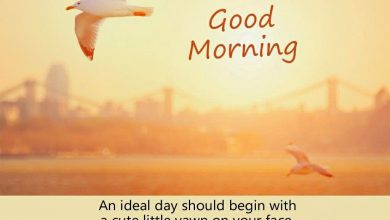Birds good morning image Greetings Images 390x220 - Birds good morning image Greetings Images