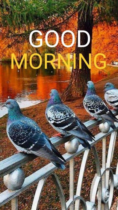 Birds good morning image images Greetings Images - Birds good morning image images Greetings Images