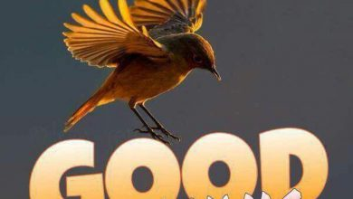 Birds good morning photos Greetings Images 390x220 - Birds good morning photos Greetings Images