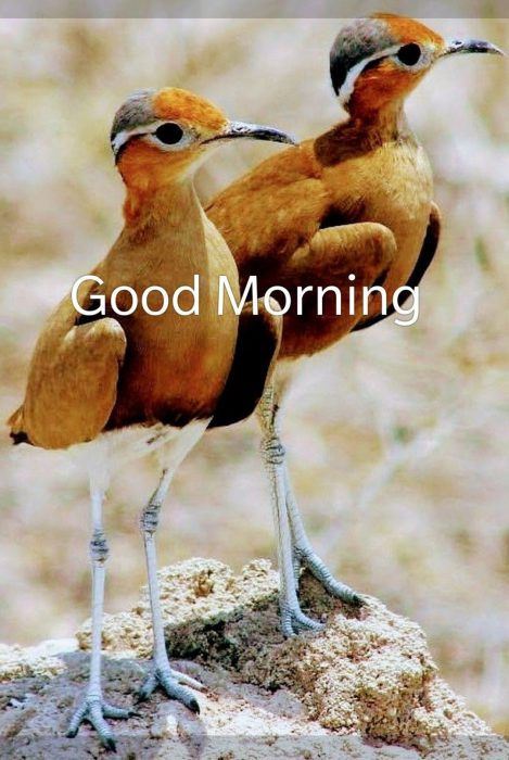 Birds good morning today photo Greetings Images - Birds good morning today photo Greetings Images
