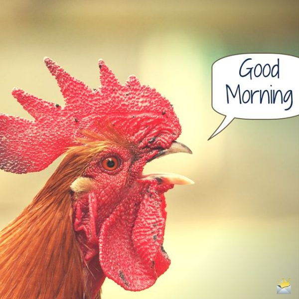 Birds happy good morning photo Greetings Images - Birds happy good morning photo Greetings Images