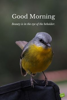 Birds happy morning photos Greetings Images - Birds happy morning photos Greetings Images