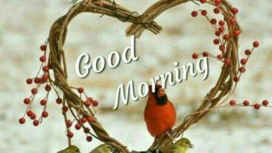 Birds morning wishes photo Greetings Images 390x220 - Birds morning wishes photo Greetings Images