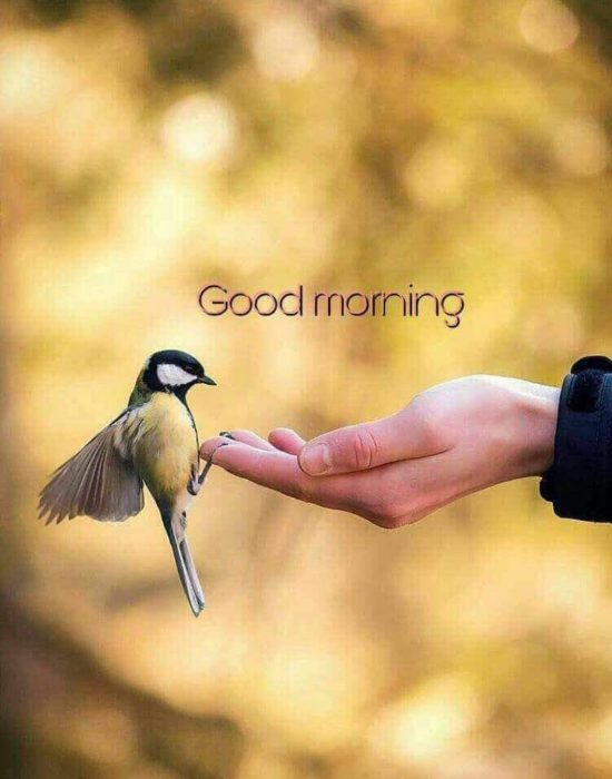 Birds new good morning images Greetings Images - Birds new good morning images Greetings Images
