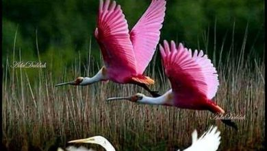 Birds sweet morning photo Greetings Images 390x220 - Birds sweet morning photo Greetings Images
