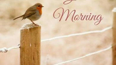 Birds sweet morning photos Greetings Images 390x220 - Birds sweet morning photos Greetings Images