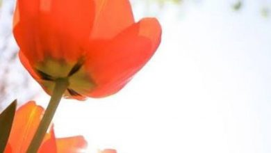 Flower good morning greetings images Greetings Images 390x220 - Flower good morning greetings images Greetings Images