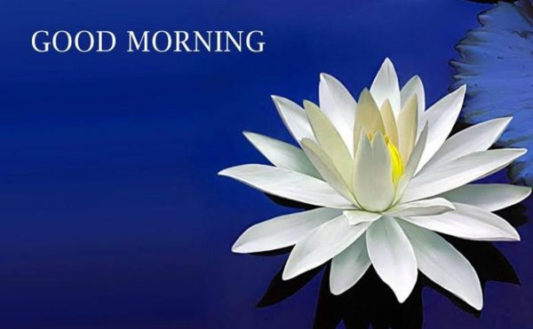 Flower good morning image Greetings Images - Flower good morning image Greetings Images