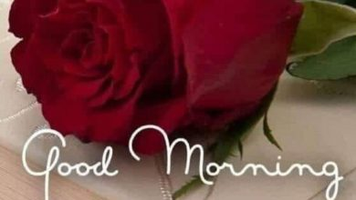 Flower great day morning photo Greetings Images 390x220 - Flower great day morning photo Greetings Images