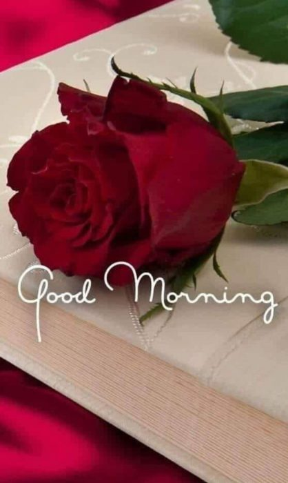 Flower great day morning photo Greetings Images - Flower great day morning photo Greetings Images