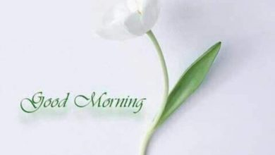 Flower great morning image Greetings Images 390x220 - Flower great morning image Greetings Images