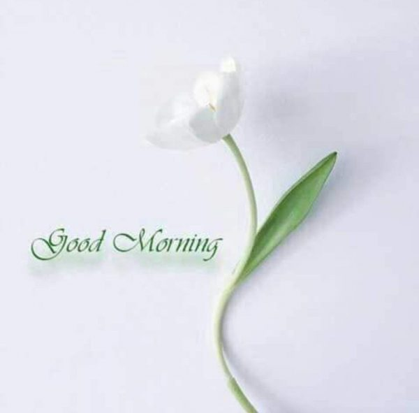 Flower great morning image Greetings Images - Flower great morning image Greetings Images
