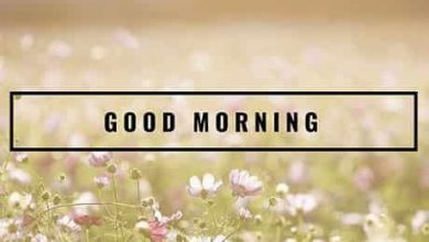 Flower happy morning photos Greetings Images 390x220 - Flower happy morning photos Greetings Images