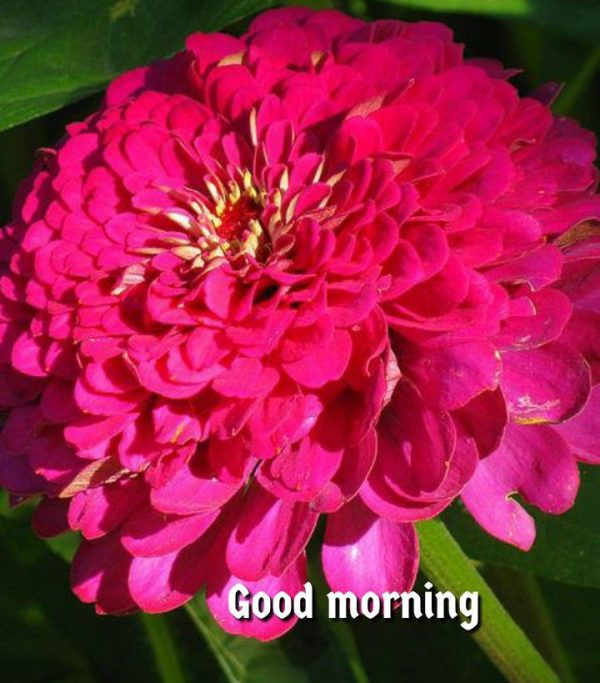 Flower new good morning photo Greetings Images - Flower new good morning photo Greetings Images