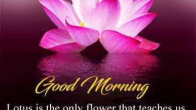 Flower sweet morning image Greetings Images 390x220 - Flower sweet morning image Greetings Images
