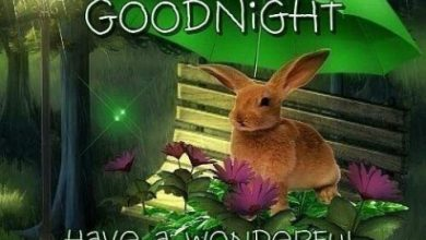 Good night good good night image 390x220 - Good night good good night image