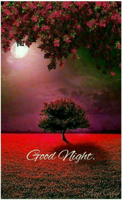 Good nite sms image - Good nite sms image
