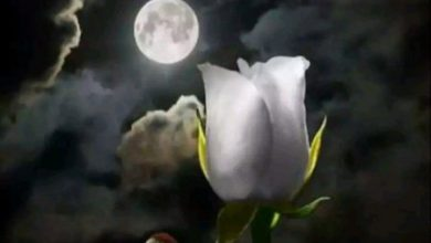 Good nite wish to someone special image 390x220 - Good nite wish to someone special image