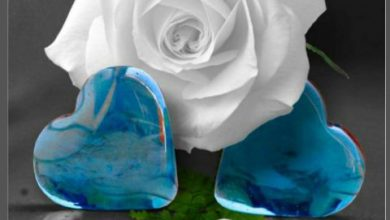 Goodnight definition image 390x220 - Goodnight definition image