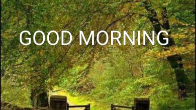 Happy morning mountains photo Greetings Images 390x220 - Happy morning mountains photo Greetings Images