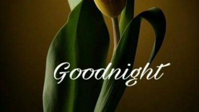 Love good nite image 390x220 - Love good nite image