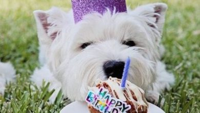Nice birthday greetings Image 390x220 - Nice birthday greetings Image