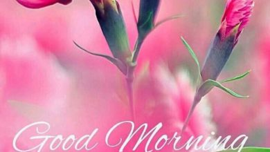 Rose great morning image Greetings Images 390x220 - Rose great morning image Greetings Images