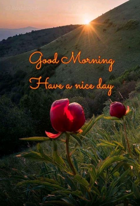 Rose new good morning photo Greetings Images - Rose new good morning photo Greetings Images