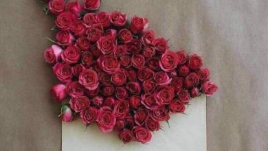 Rose sweet morning image Greetings Images 390x220 - Rose sweet morning image Greetings Images