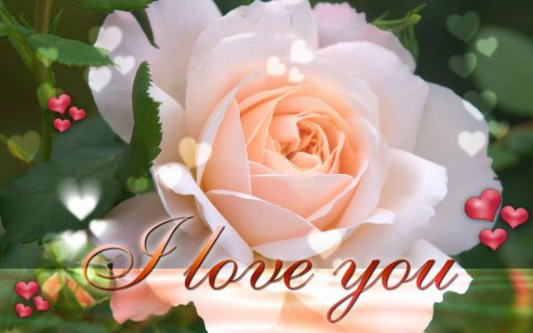 I Love You Darling Quotes Image - I Love You Darling Quotes Image