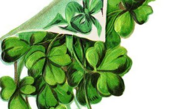 St Patricks Day Sayings And Blessings 390x220 - St Patrick's Day Sayings And Blessings